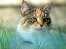 assurance_animaux_kovetz